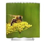 Honeybee Harvesting Pollen From Flowers Shower Curtain