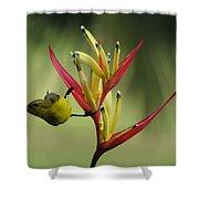 Honeyeater On Bird Of Paradise Shower Curtain