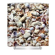 Honeymoon Island Shells Shower Curtain