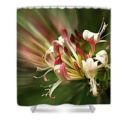 Honeysuckle Breeze Shower Curtain