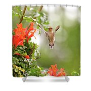 Honeysuckle Hummer Shower Curtain