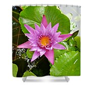 Honolulu Water Lily Shower Curtain