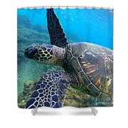 Honu Hello Shower Curtain