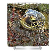 Honu In The Water Shower Curtain
