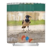 Hooded Crow On A Wall Shower Curtain