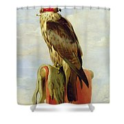 Hooded Falcon Shower Curtain by Sir Edwin Landseer
