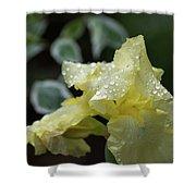 Hooded Iris Shower Curtain