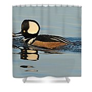 Hooded Merganser And Eel Shower Curtain