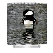 Hooded Merganser Duck Shower Curtain
