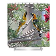 Hooded Oriole Duo Shower Curtain