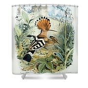 Hoopoe Shower Curtain by Edouard Travies