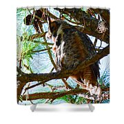 Hoot Is Down There? Shower Curtain