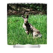 Hop Shower Curtain