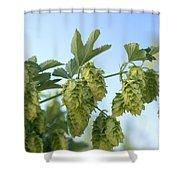 Hop Cones Shower Curtain