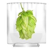Hop Flower Seed Cone On White Background Shower Curtain
