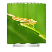 Hop On A Leaf #2 Shower Curtain