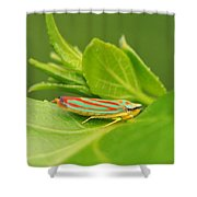 Hop On A Leaf Shower Curtain