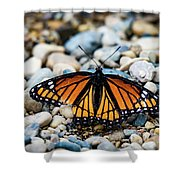 Hope Of The Monarch Butterfly Shower Curtain