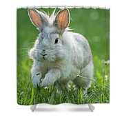 Hopping Rabbit Shower Curtain