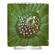 Hops Leaf, Sem Shower Curtain
