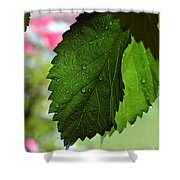 Hops Leaves Shower Curtain