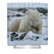 Hor D'oeuvres Shower Curtain