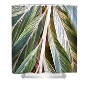 Horizon Of Palm Shower Curtain