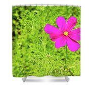 Pink Cosmos II Shower Curtain