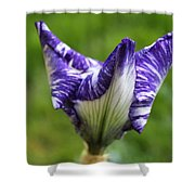 Horizontal Spring Flambe Shower Curtain