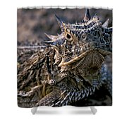 Horn Toad Shower Curtain