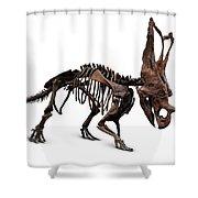 Horned Dinosaur Skeleton Shower Curtain