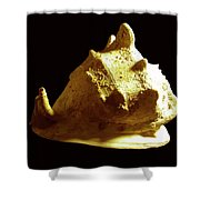Horned Helmet Seashell Cassis Cornuta Shower Curtain