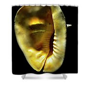 Horned Helmet Shell Cassis Cornuta Shower Curtain