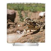 Horned Lizard Shower Curtain