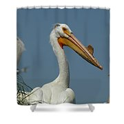 Horny Pelican Shower Curtain