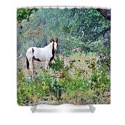 Horse 017 Shower Curtain