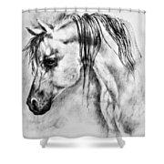 Arabian Horse 1 By Diana Van Shower Curtain