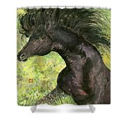 Horse - 7 Shower Curtain