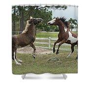 Horse Aerobics Shower Curtain