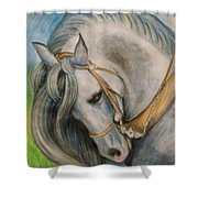 Horse. Shower Curtain