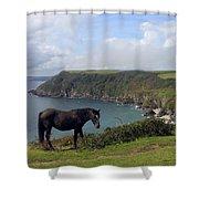 Horse Along Coastal Path Cornwall Shower Curtain