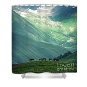 Horse Among The Mountains Of Georgia Shower Curtain