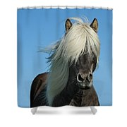 Horse And Blue Sky Shower Curtain