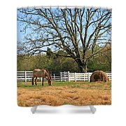 Horse And Hay Shower Curtain
