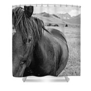 Horse And Sawtooth Mountains Shower Curtain