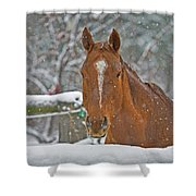 Horse And Snowflakes Shower Curtain