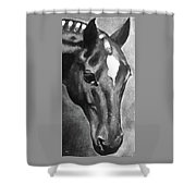 Horse Art Horse Portrait Red Black And White Shower Curtain