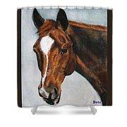 Horse Art Portrait Of Horse Maduro Shower Curtain