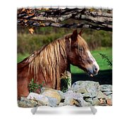 Horse At Stone Wall Shower Curtain