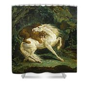 Horse Attacked By A Lion Shower Curtain
